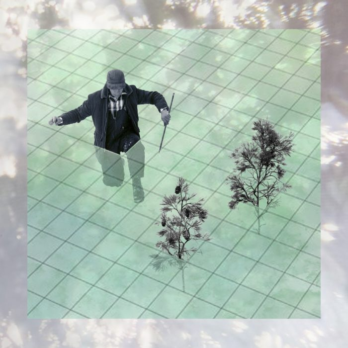 An illustration depicts a figure in a coat and overalls, kneeling in a pale green grid, with an enormous needle in one hand. A few coniferous saplings sprout through the grid, too. The entire image is overlaid with a pale photograph of light filtering through tree branches.