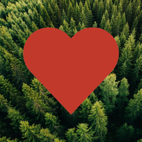 A giant red heart shape centered on an overhead view of a lush green pine forest.