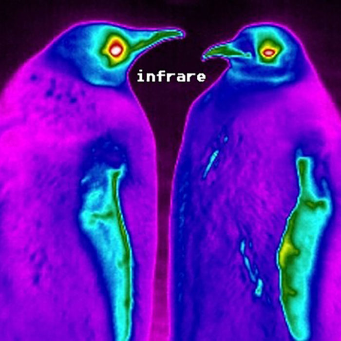 "2 Penguins in infrared with ""infrare"" written between them."